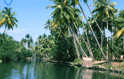 Les backwaters, Inde du sud